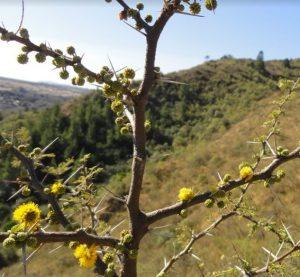 Rancho Pampa - Conocé la flora autóctona en tus vacaciones de invierno